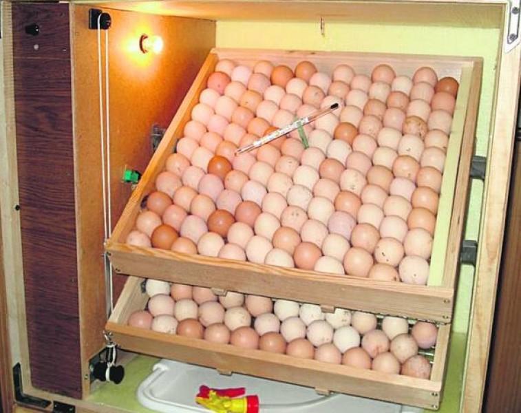 Как сделать инкубатор на одно яйцо